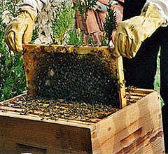 cadre à miel